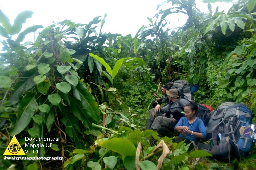 Tim beristirahat di tengah tumbuhan tepus setelah membuka jalur sejauh 2 km.