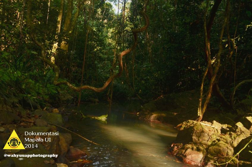 Sungai yang mengalir di tengah hutan TNBBS.