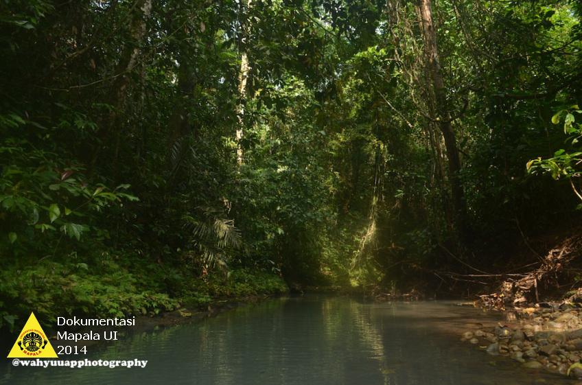 Aliran Sungai di hutan TNBSS. Hutan TNBBS banyak dialiri oleh sungai-sungai yang banyak terdapat ikan di dalamnya.
