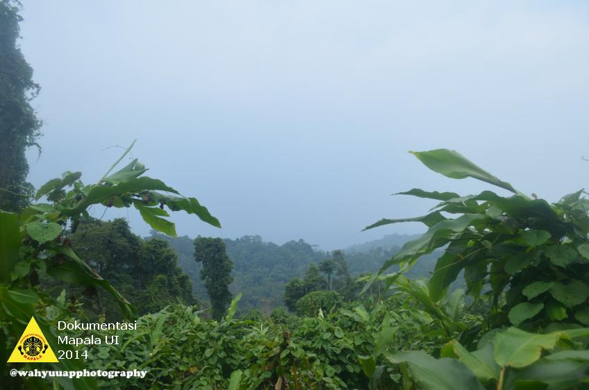 Vegetasi hutan Taman Nasional Bukit Barisan Selatan yang didominasi oleh Mantangan. Mantangan adalah tumbuhan yang dapat mematikan pohon yang dirambatinya.