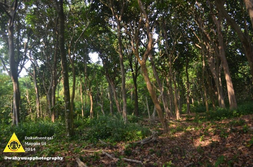 vegetasi-hutan-pinggir-pantai